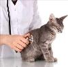 Ветеринарные клиники в Белеве